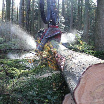 Holzeinschlag